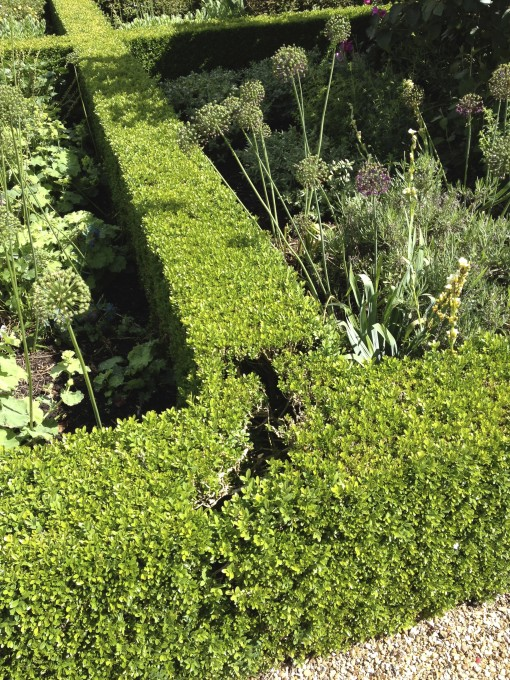 Mysterious, inexplicable void in shrubbery