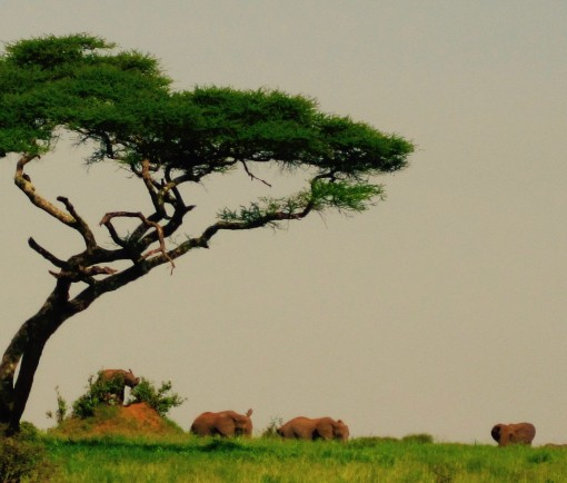 Look closely at that termite hill next to the tree. That's an elephant standing on top