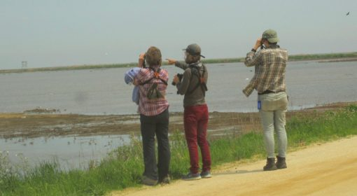 Even young hipster birders are sexually indistinguishable
